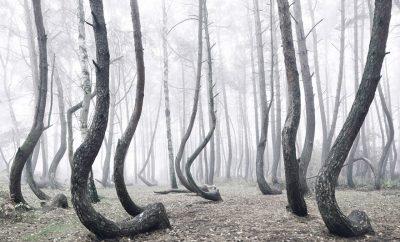 круглые деревья польская роща
