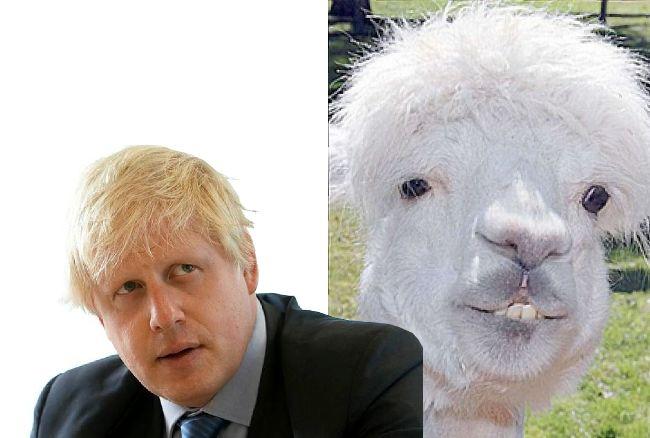 животные политики